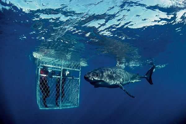 south-africa-diving-cape-town
