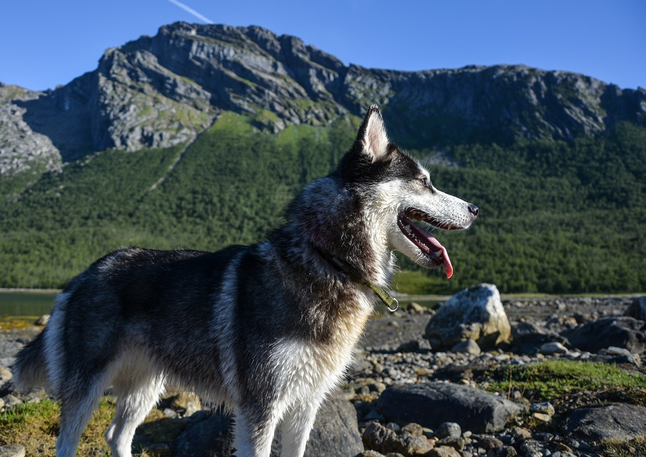 Traveling With Dogs Tips