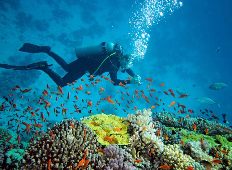Scuba Diving and snorkeling Goa India